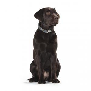 Hundehalsband Zigzag